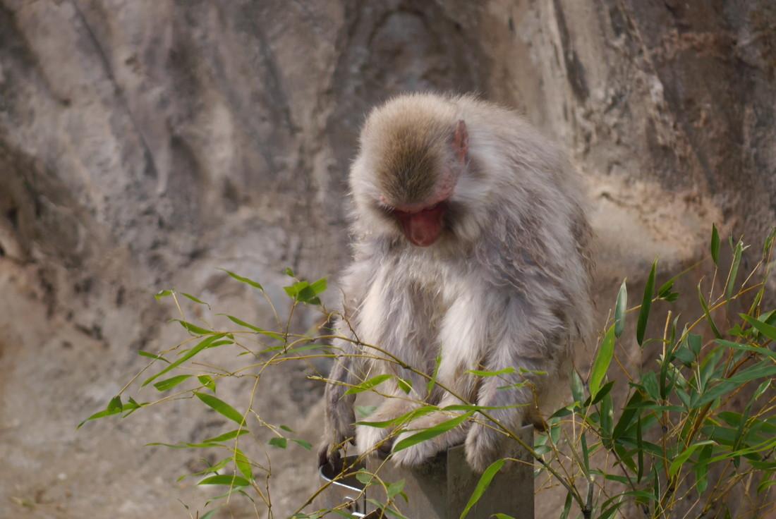 上野動物園の猿