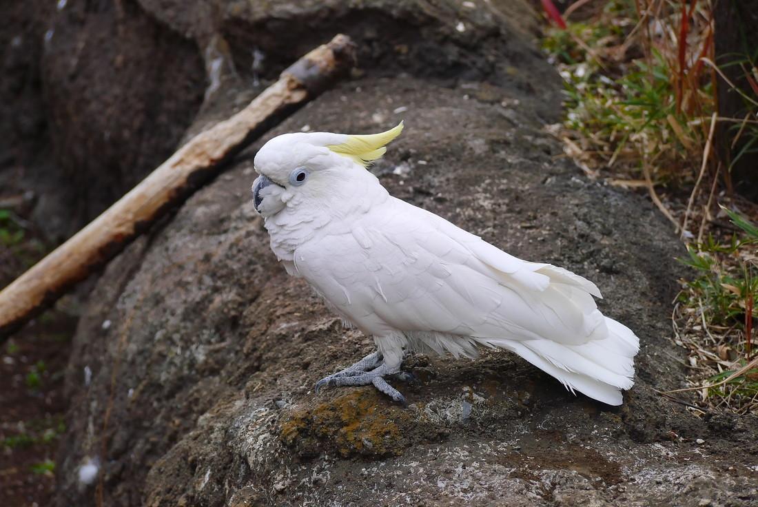 上野公園 鳥
