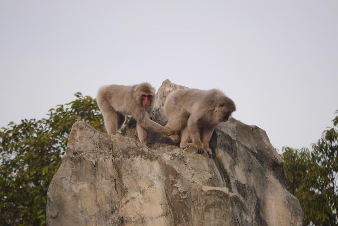 上野動物園 お猿