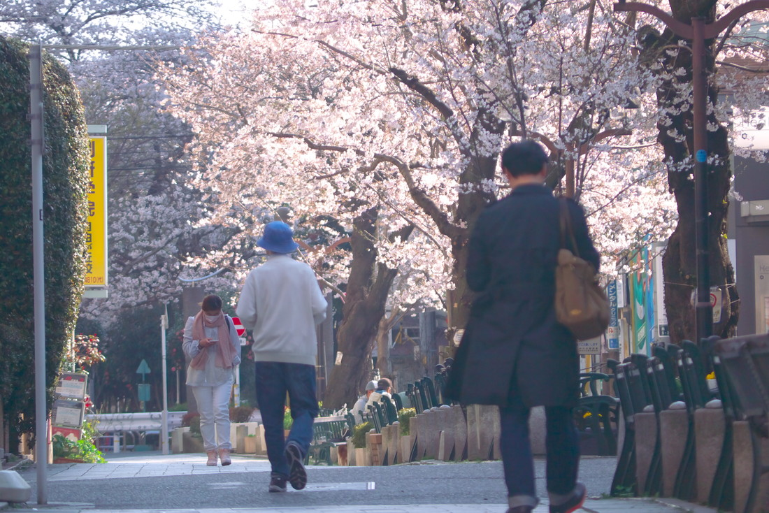 自由が丘 2018桜