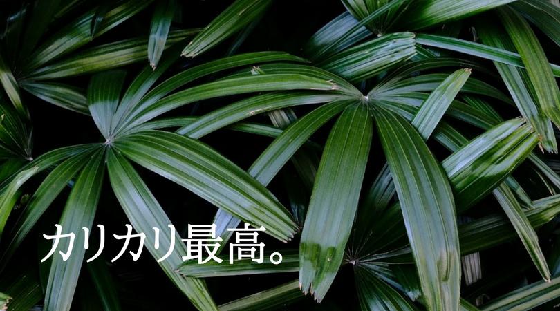 富士フイルムのカメラでカリカリでシャープに植物を撮る。カリカリ最高。