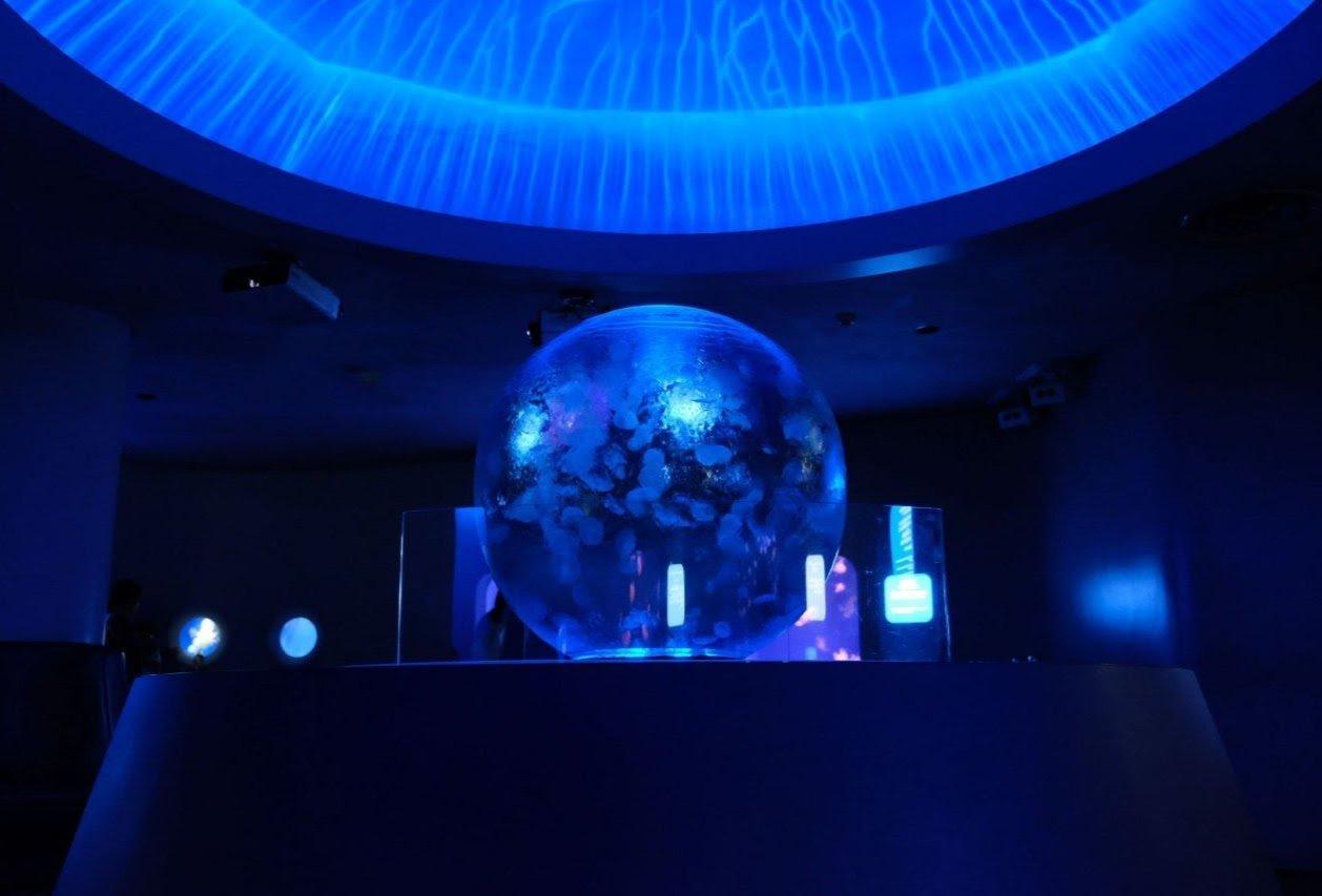 新江ノ島水族館クラゲファンタジーホール