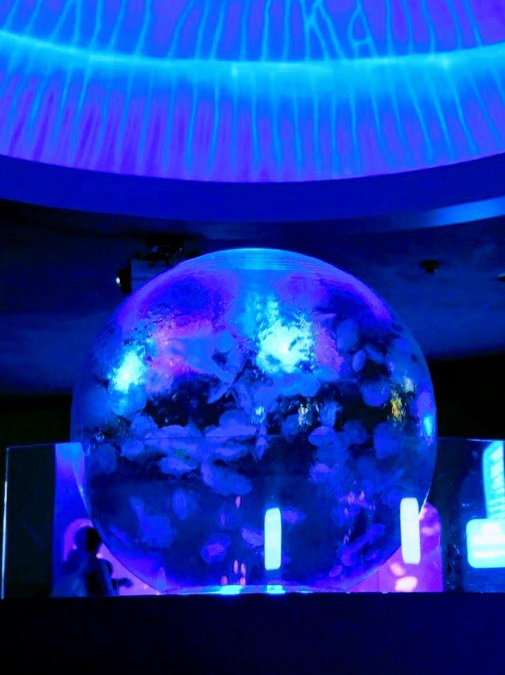 新江ノ島水族館 海月の惑星