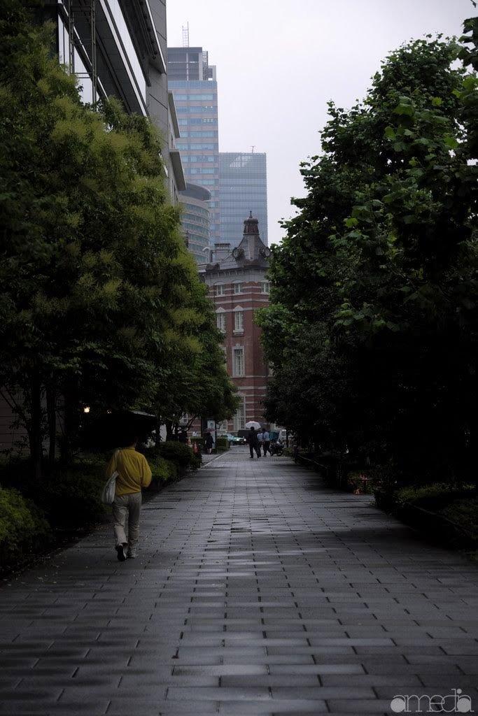 東京駅までの並木道