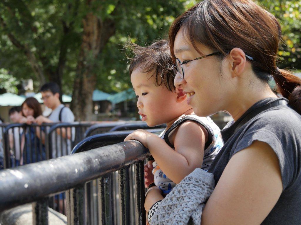 動物園で動物を観る息子
