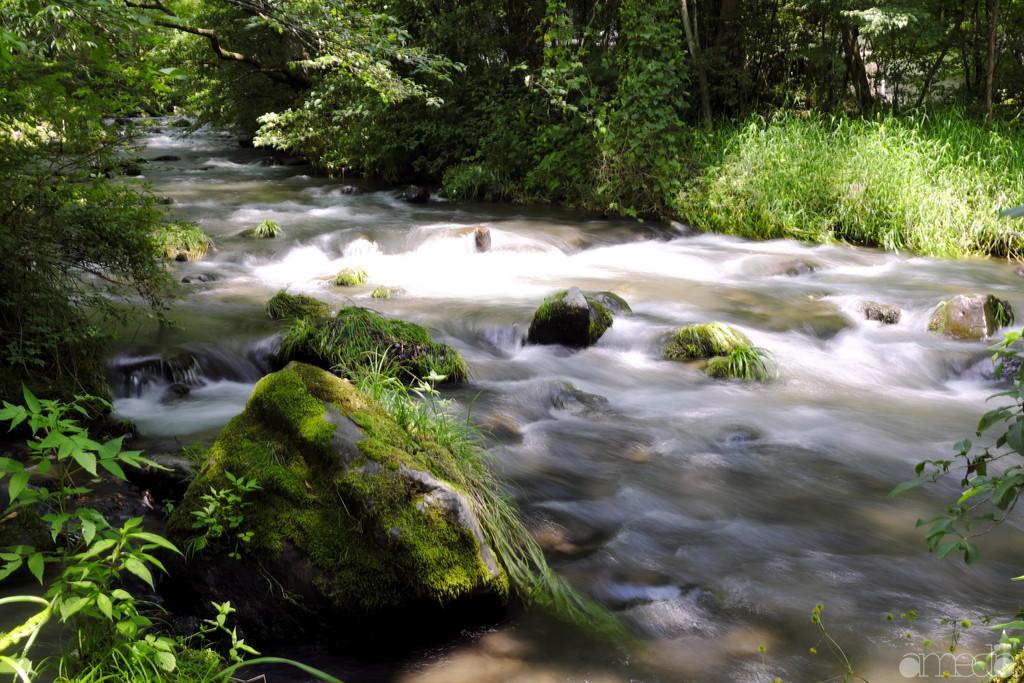 ハレニレテラスの渓流