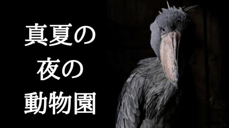 急げ期間限定!!!!【真夏の夜の動物園・上野】で闇夜に潜む動物を撮影してきた。