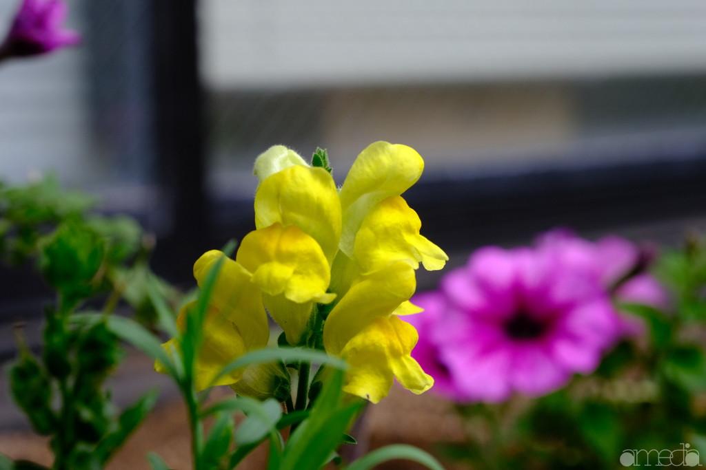 カラークロームエフェクト 黄色