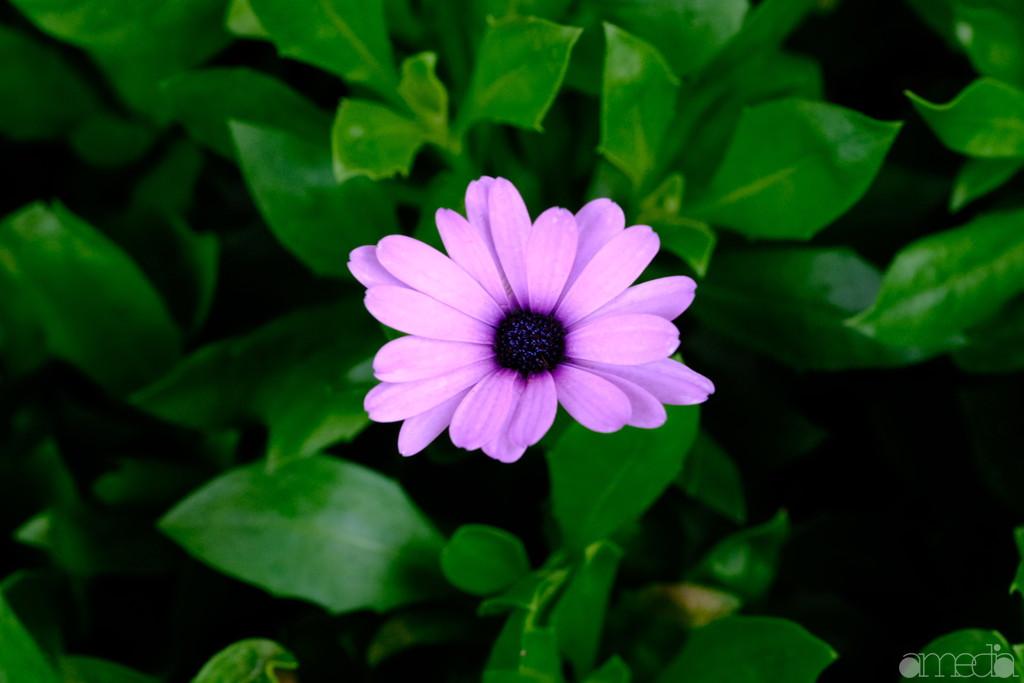 カラークロームエフェクト 紫