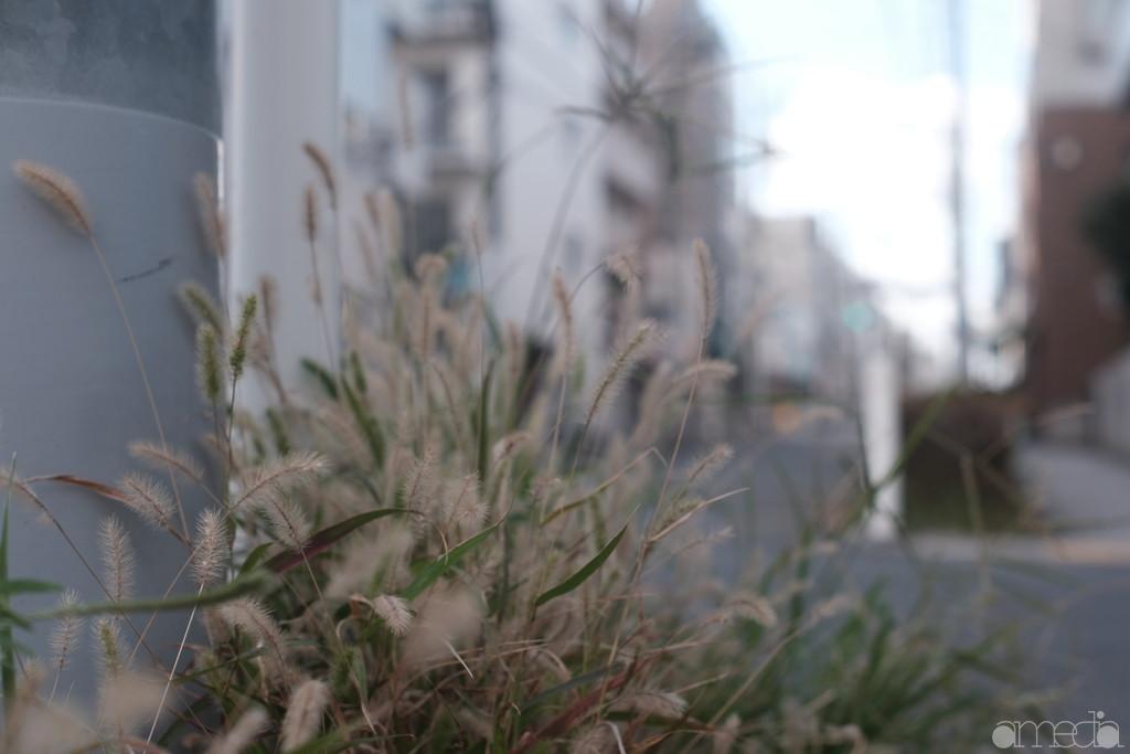富士フイルムとオールドレンズ