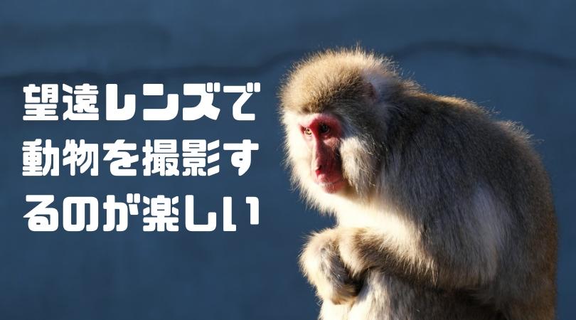 【作例】動物園で富士フイルムXF55-200mm F3.5-4.8 R LM OISとX-T3で撮影してきたよ(上野動物園と野毛山動物園) 。