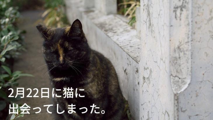 2月22日は猫の日ですって?運命的に猫をさつえいしてきた【猫写真のみですん】