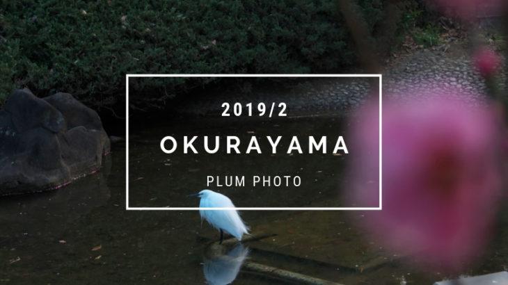 【2019年梅の有名撮影スポット】大倉山公園の梅林を撮影してきました|olympus OMDem5mark2を使用