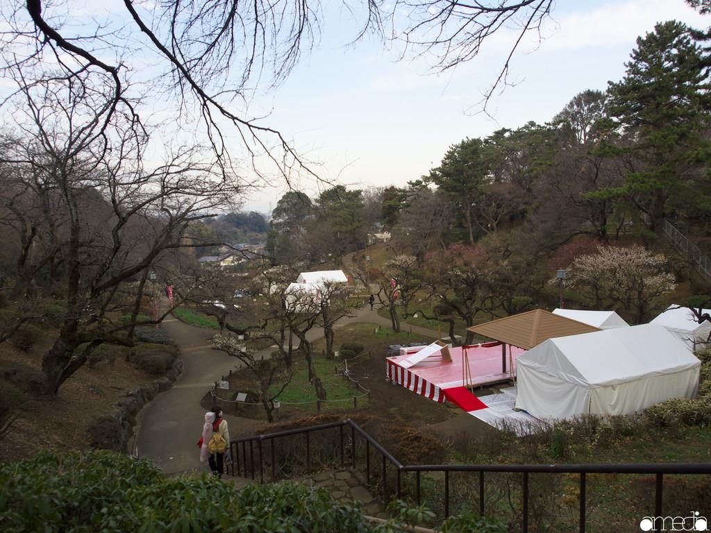 大倉山公園 梅
