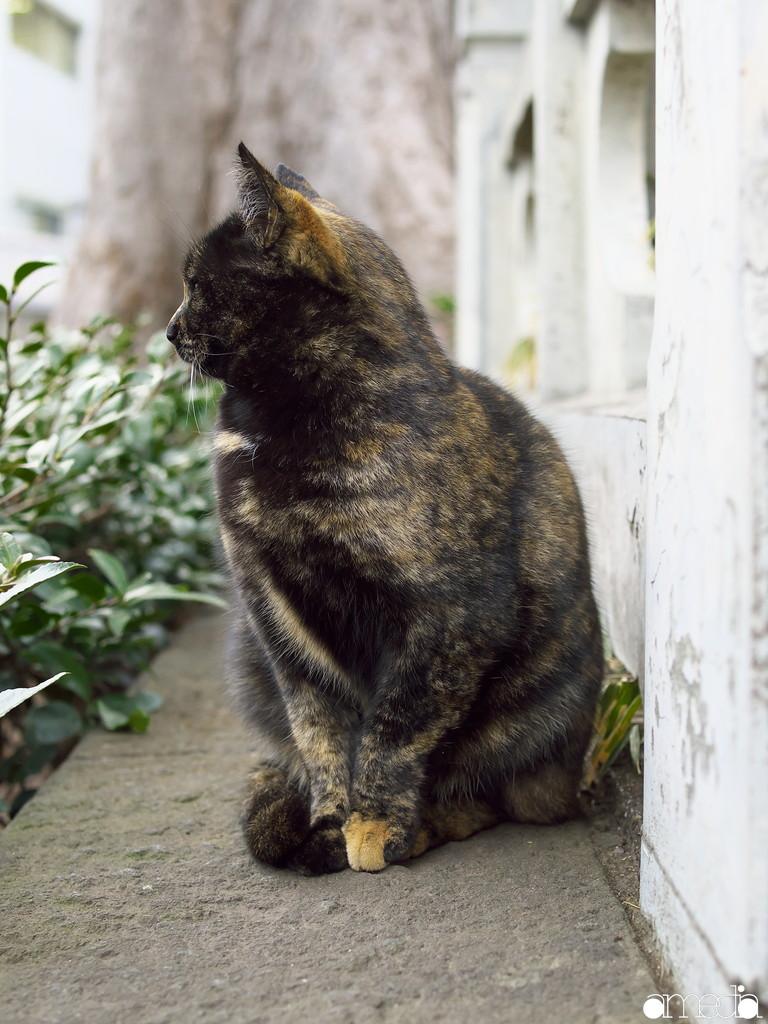 2月22日 猫の日に猫