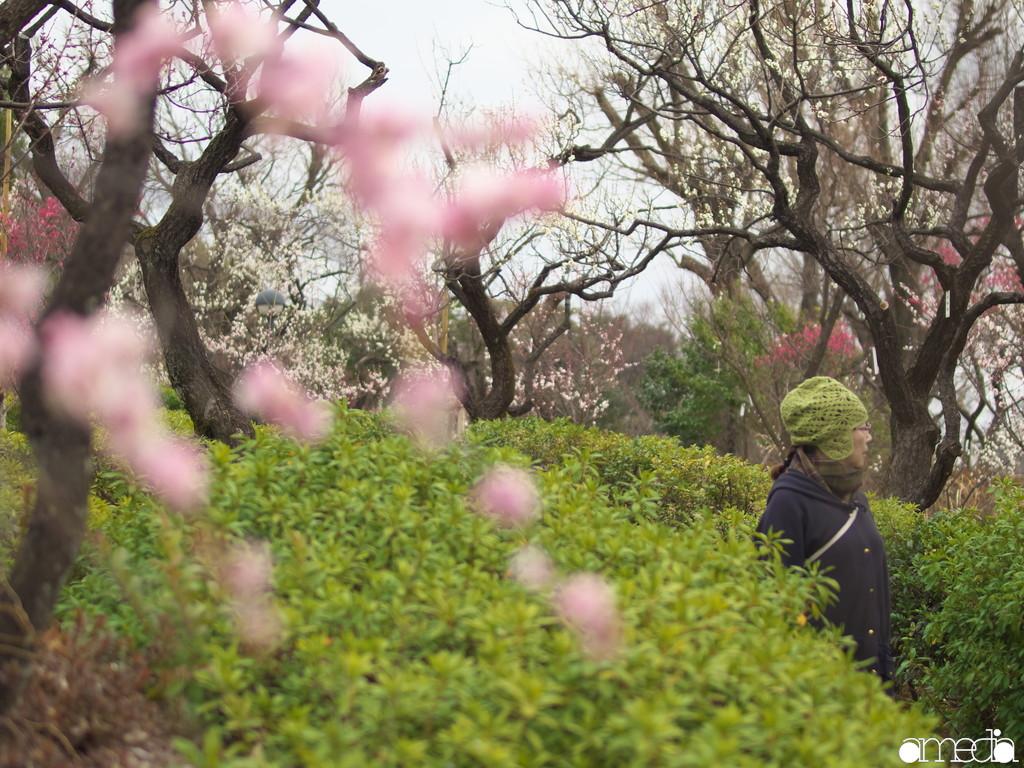 羽根木公園 梅林 梅まつり2019