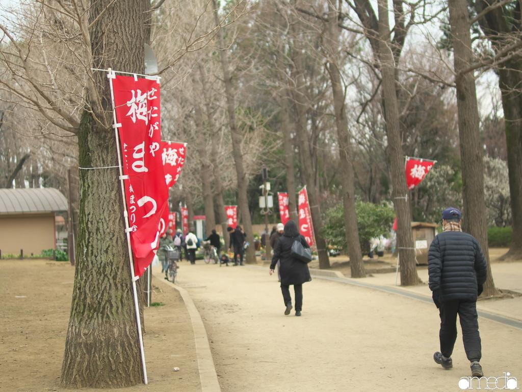 2019 羽根木公園 梅まつり