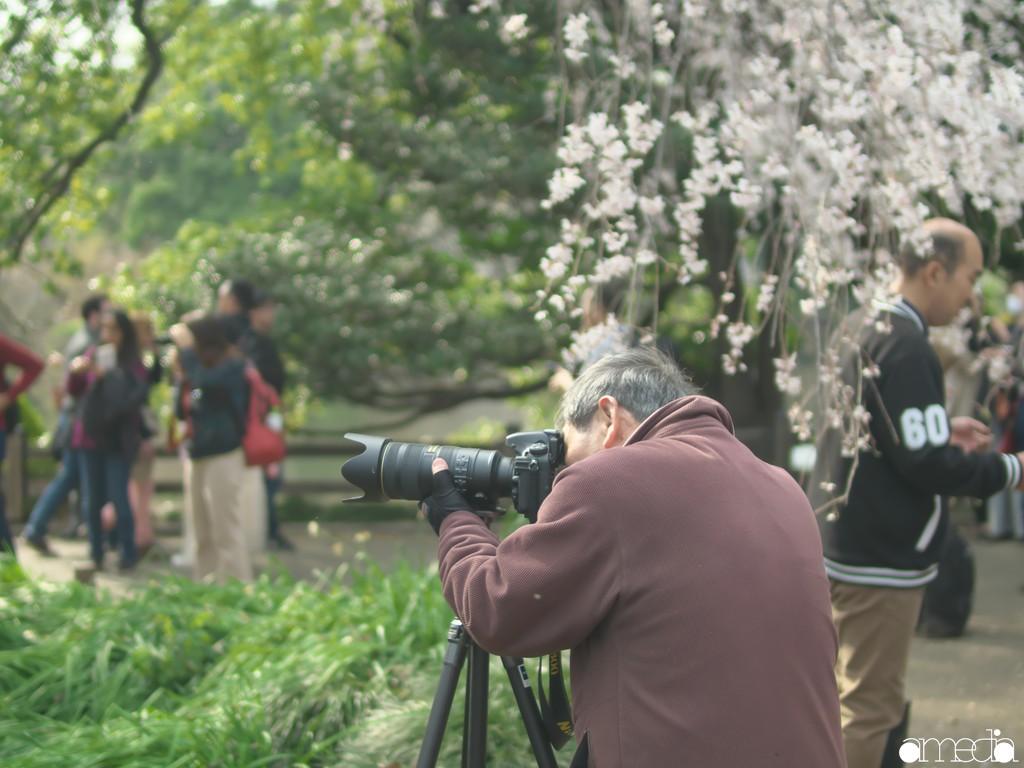 2019新宿御苑 桜