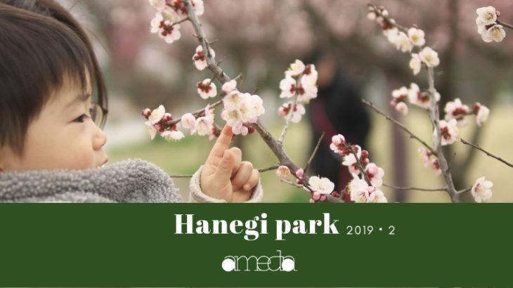 都内梅の有名撮影スポット羽根木公園に撮影にいってきました。|梅ジローにも出会えたよ