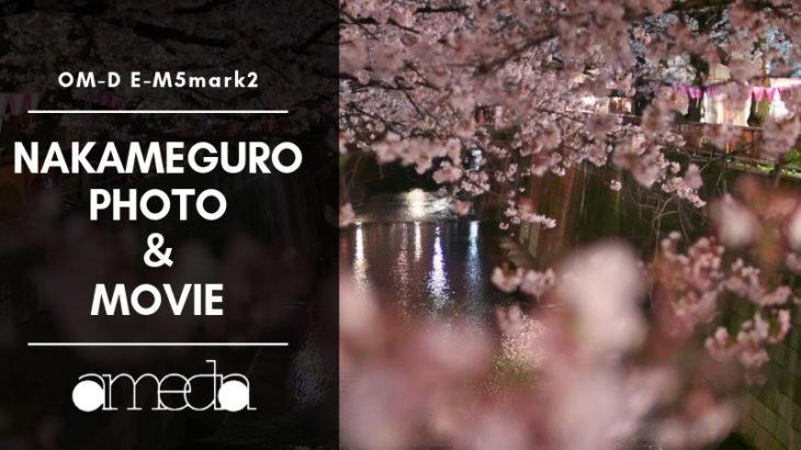 中目黒の昼と夜の桜を撮影してきました|OM-D E-M5mark2を使って写真と動画も撮ってきた