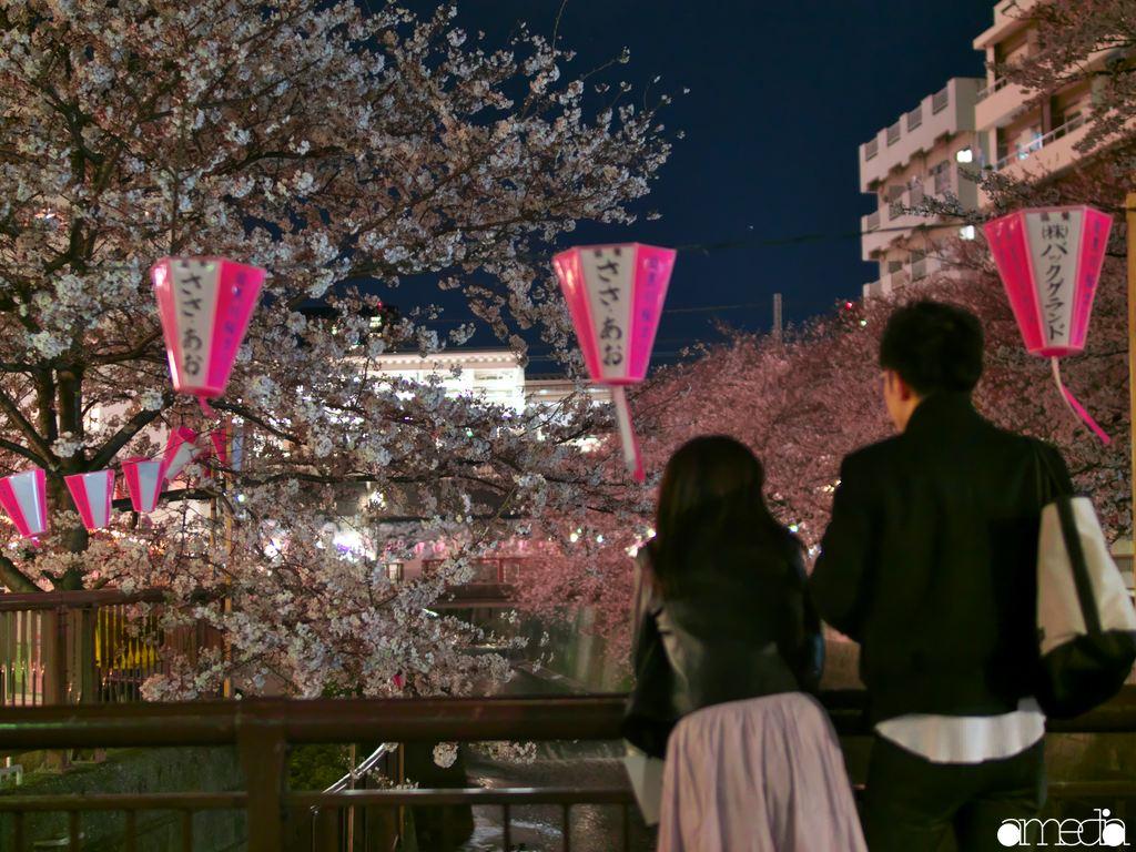 2019年 中目黒 桜