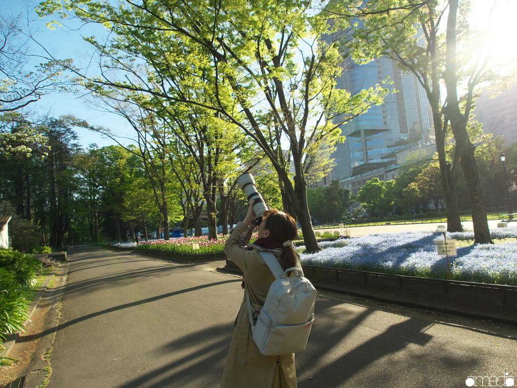 日比谷公園 撮影 ネモフィラ