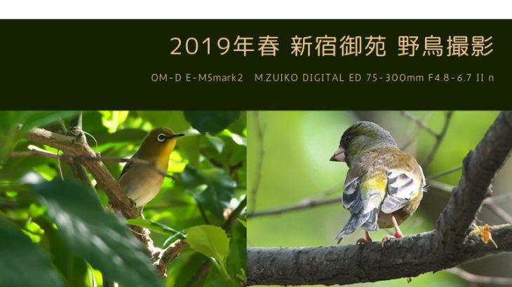 新宿御苑 野鳥撮影