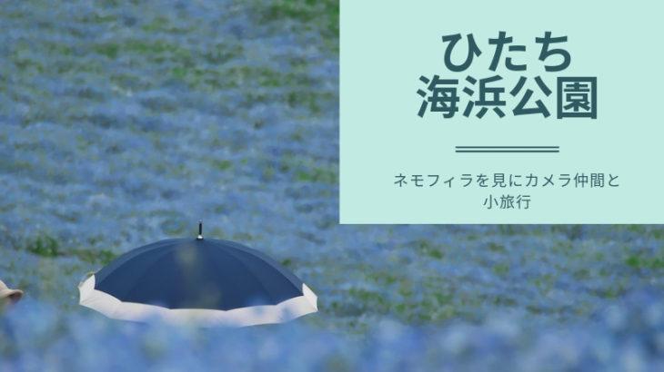 【2019年春】ひたち海浜公園のネモフィラは本当に絶景だったよ!! | 長距離撮影遠征をしてきました。